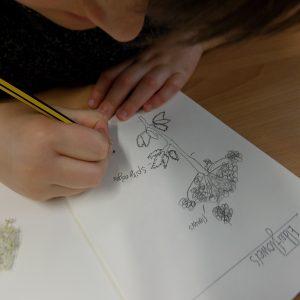 child drawing a diagram of elderflowers