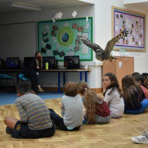 owl flying across a classroom