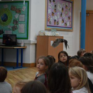 owl flying in classroom